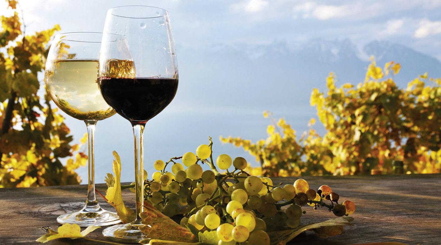 vino-bio-1